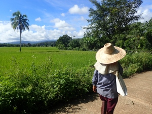Pictured is the cutest Thai woman, Mae Giang, on the way to the farm :).
